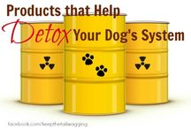 Detox your dog / #1 best selling activated charcoal detox supplement powder for cats, dogs, and animals http://www.activatedcharcoalfordogs.com/