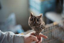 Awwwww! / cute shit  / by Heather Pilarczyk