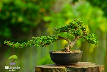 Bonsai ideas formas