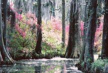 Travel *South Carolina*