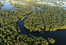 wetlands / Wetlands - marshes, backwaters, salty lagoons, shallow lakes and other stagnant freshwater ecosystems are among the biologically richest in the world.