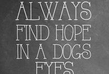 Love quotes for pets / Citations d'amour pour animaux de compagnie