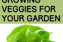 In The Garden / Fruit and Vegetable gardening