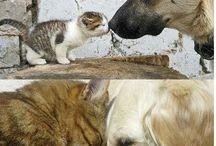 macky a psi
