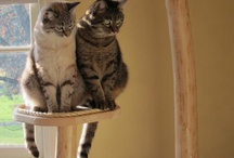 Customer photos / Mountain Cat Tree products in their new homes.
