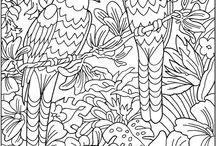 Kleuren voor volwassenen vogels