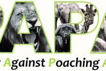 pottery against poaching animals