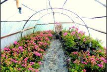 Fidanlığımız / Yalıkavak Gökçebeldeki fidanlığımız ile toptan bitki satışı, peyzaj uygulama hizmetleri ile uzman ekibimiz size hizmet verecektir.
