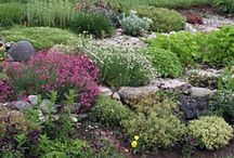 Garden Ideas / by Free to Be You and Me