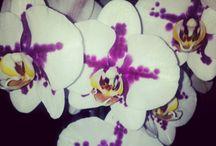 My work: Florals / https://www.flickr.com/photos/ayshaalton/