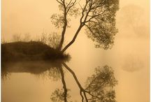 Trees - Living Silhouettes / Trees have stories to tell if you listen carefully