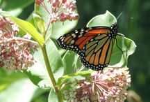 Native Plants and Insects of Texas