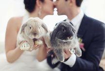 Brides & Pets