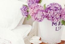 Flower arrangements / by Stéphanie Portelli
