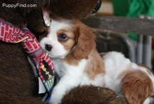 Possible pups  / Deciding what dog to get  / by Maggie Ward
