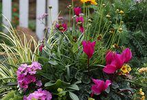 Container garden / Colourful pots