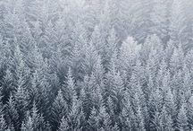 Forest Hail