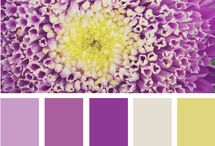 color schemes / by AnitaPardue