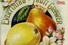 Vokes 13 Vintage fruits, vegetables and wines. / Vanhoja piirrettyjä hedelmiä, vihanneksia ja viinejä.