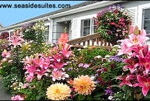 Weiss' Paradise Flowers / by Weiss' Paradise Suites