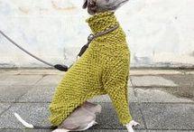 greyhund