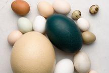 Sem 1 eksamen æg