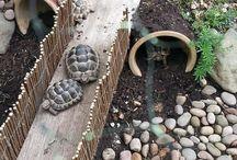 Schildkröten Gehege