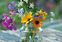 Flowers and Plants / Beautiful Nature