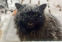 Me!Me! I'm a cat!!