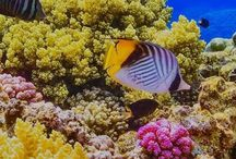 A Coral reef in the Red Sea near Egypt. #HeathrowGatwickCars.com
