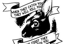 animals  »  rabbits.