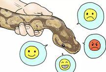 Python Humor