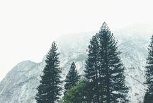 лес путешествие