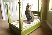 If we had a cat ... / Don't know if we'll ever get another kitty, but if we did these are some useful or creative ideas for coexisting happily. / by Deanna Denk