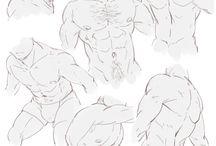 Anatomy-Torso