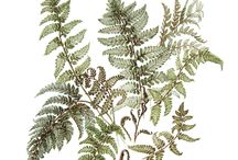 botanical refs