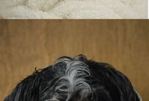 Dog grooming / Dog Grooming pictures