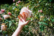 C ~ [ PAINT WHITE ROSES RED ] / Alice Liddell