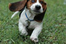 Pet time! / by Courtney Lynn