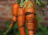 My veg patch / Vegetables