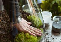 DIY: home gardening