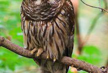 Owls & friends