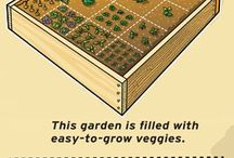 Raised veggies beds