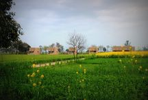 Punjabiyat near Amritsar!! / Punjabiyat offers an opportunity to experience life on a live farm ensconced within the rustic smell of the country. Stylishly simple four standalone cottages and a spacious lounge nestle in the gleaming expanse of farmland offering peaceful yet stimulating environment.