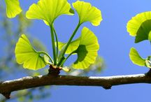 Καλωπιστικά δέντρα