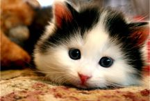 Adorable cat pics / by Christie Holmes