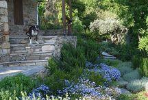 Mediteranean garden - easy care