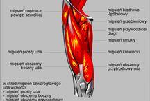 anatomia_txt
