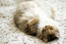 Lifestyle // Cute & Furry