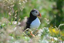 Scottish wildlife / Scottish wildlife